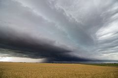 A line of heavy thunderstorms fills the sky over a wheat field in eastern Colorado. Royalty Free Stock Photo