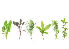 Line of Herbs Royalty Free Stock Images