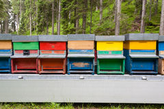 Line of hives Royalty Free Stock Images