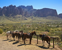 A Line of Horses at a Hitching Post Royalty Free Stock Photos