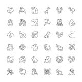 Line icons. Animals Royalty Free Stock Photography