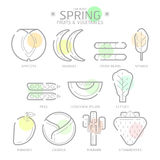 Line Icons Spring Fruits and Vegetables with Colour Spot,Vector Royalty Free Stock Images