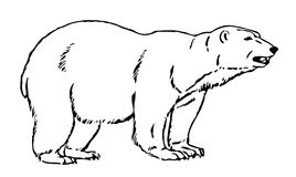 Line Illustration Of An Artic Bear Stock Images