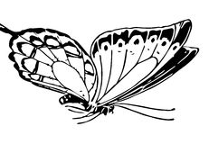 Line Illustration Of A Butterfly Stock Image