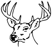 Drawing Of A Reindeer /eps Stock Photography