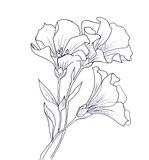 Line ink drawing of flower Stock Images