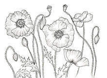 Line ink drawing of flower Stock Photos