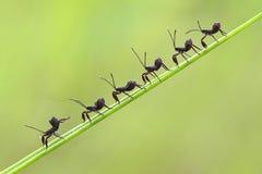 Line Stock Image