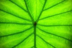 Line on leaf Stock Photos