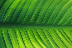 Line leaf Royalty Free Stock Photos