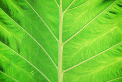 Line of leaf Stock Photo