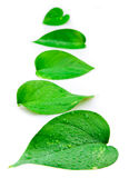 Line of leaves stock images