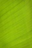Line of leaves banana tree. Texture of leaves banana tree Royalty Free Stock Photo