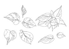 Skeletal  Leaves lined design on white background illustration  vector illustration
