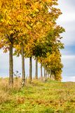 Line of autumnal little chestnut trees, grass and sky. Line of little chestnut trees, grass and sky with clouds - landscape in autumn colors Royalty Free Stock Photography