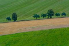 Line of trees on the bevelled field. Line of lonely trees on the bevelled green field in Slovakia, Europe royalty free stock images