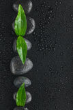 Line made from black stones and leaves Stock Photography