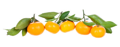 Line of mandarins with leaves Royalty Free Stock Photography