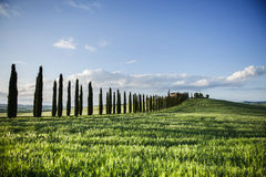 Line of Meadow in tuscany Stock Image