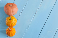 Line of miniature orange pumpkins. With empty Stock Photos