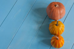 Line of miniature orange pumpkins. With empty Royalty Free Stock Photo