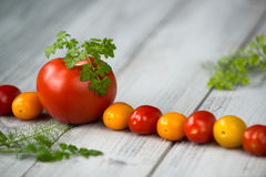 Line of natural organic red and yellow cherry tomatoes and tomato with fresh herbs on top Stock Image