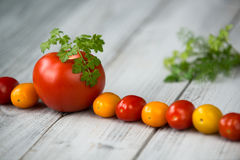 Line of natural organic red and yellow cherry tomatoes and tomato with fresh parsley on top on a wooden background Royalty Free Stock Image