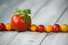 Line of natural organic red and yellow cherry tomatoes and tomato with fresh parsley on top on a wooden background Stock Image