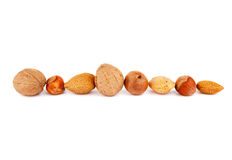 Line of nuts Stock Image