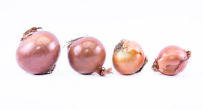 A line of ocher onions on a white background - front view Royalty Free Stock Images