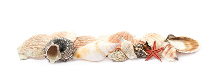 Free Line Of Sea Shells  Royalty Free Stock Photos - 87222138