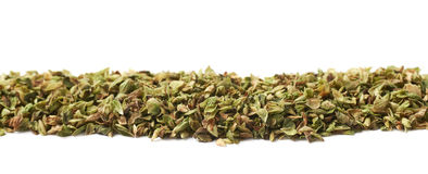 Line of oregano seasoning isolated Royalty Free Stock Photo