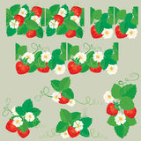 Line ornament with Strawberries in heart shapes with flowers and. Leaves  on gray background. Pattern endless fragments and vignettes Stock Images
