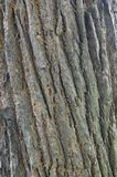 Line pattern of the tree bark Royalty Free Stock Photos