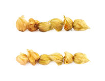Line of physalis fruits isolated Stock Image
