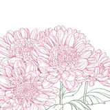 Line pink chrysanthemum background Royalty Free Stock Photos