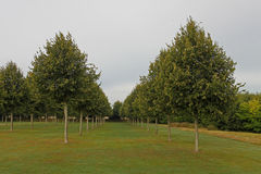 Line of planted trees Stock Photos