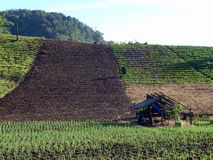 Line of plots on highland farm Stock Photography