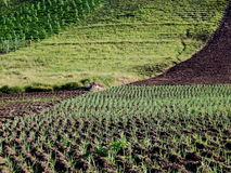 Line of plots on highland farm Royalty Free Stock Photography
