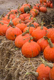 Line of pumpkins Stock Images