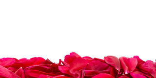 Line with red petals stock images
