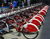 Line of Red and White Bicycles Stock Image