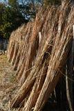 A Line of Reeds Stock Photos