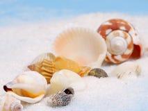Line of sea shells Stock Photo