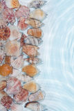 Line of sea shells in the water Royalty Free Stock Photo