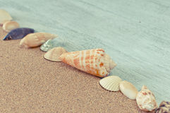Line of seashells on beach sand. Decorative line of shells on beach sand Royalty Free Stock Photography