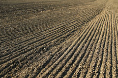 Line with seeds on agriculture field soil. Harrow line with seeds on agriculture field soil Stock Photo