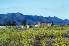 Line Shack in the West. Shack with yellow wildflowers in the foreground and mountains in the background Stock Images