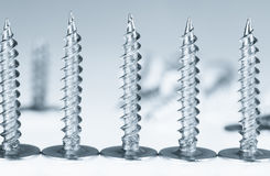 Line of silver screws toned grey Stock Photography