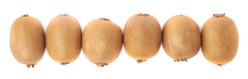 Line of six kiwifruits isolated Stock Photo